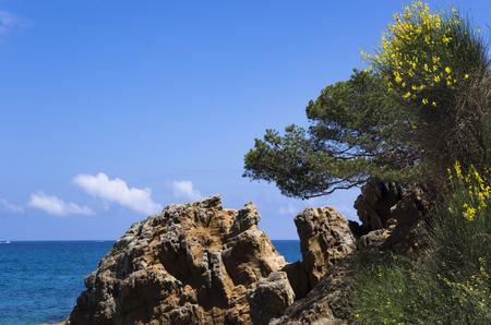 Rocky shore near the mediterranean sea