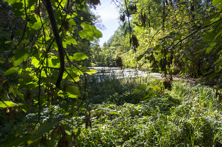 Thickets around a forest lake