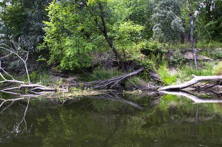 Árboles caídos en la orilla