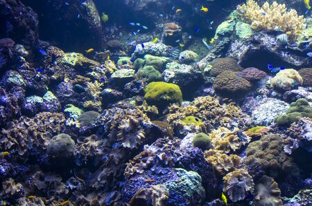 Landscape of sea reef underwater Archivio Fotografico - 132072946