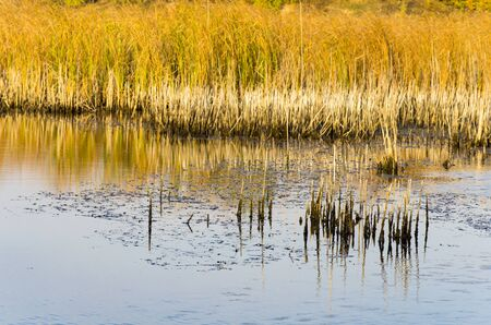 Lake with yellow reeds on the shore Archivio Fotografico - 132270588