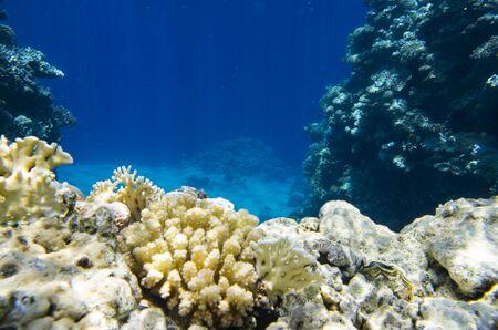 Underwater landscape of the red sea Archivio Fotografico - 132073391