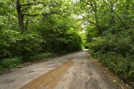 Road in the summer deciduous forest Archivio Fotografico - 132073253