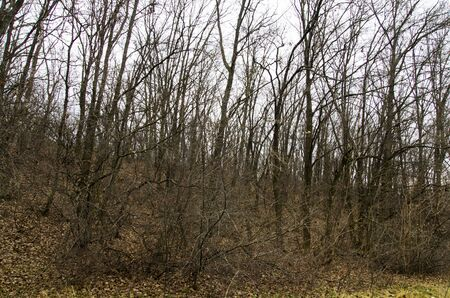 Trees and bushes without leaves on a hillside Archivio Fotografico - 132073512