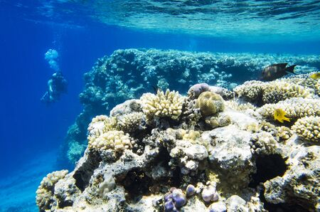 Underwater landscape of coral reef with a diver Archivio Fotografico - 132073711