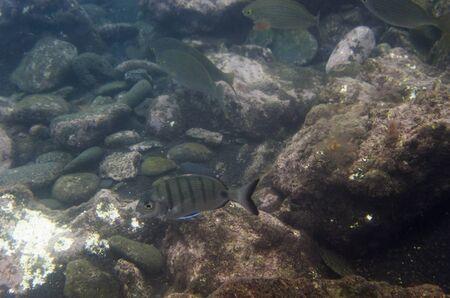 Rocky seabed fish, underwater landscape Archivio Fotografico - 132073053