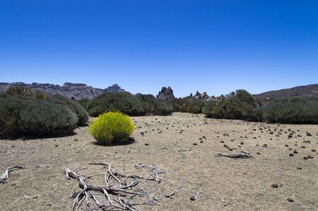 Teide volcano valley in clear weather, landscape Archivio Fotografico