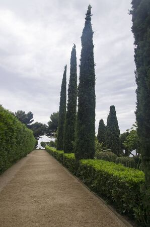 Beautiful alley with green cypresses in Spain