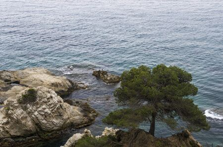 One tree on the rocky shore of the Mediterranean Sea