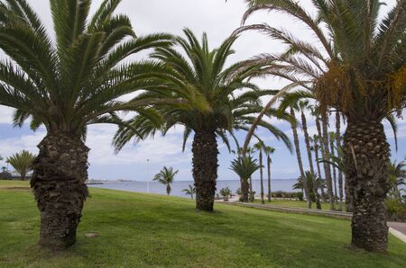 Palm trees on a green lawn off the coast of the sea