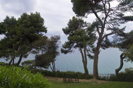 Coniferous trees on the Mediterranean coast Archivio Fotografico