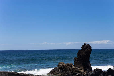Seagulls are sitting on a rock near the sea coast Archivio Fotografico