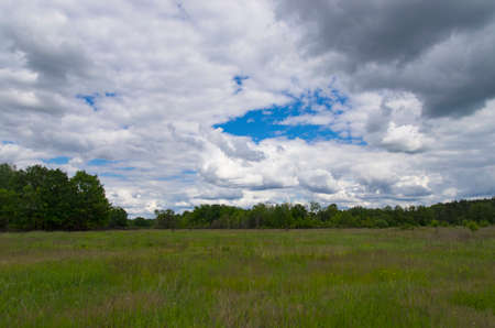 Large green meadow in the forest, panorama
