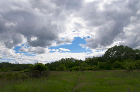 Landscape of a forest glade under the sky with clouds