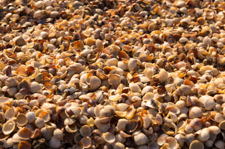 Background from small seashells on the seashore