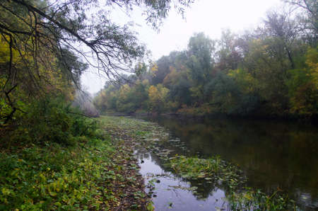 Foggy autumn river in the forest, landscape
