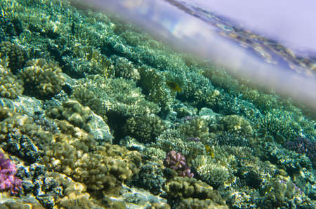 Landscape of colorful sea reef underwater