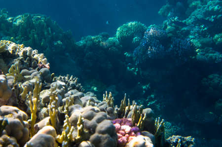 Underwater landscape of coral reef in the sea