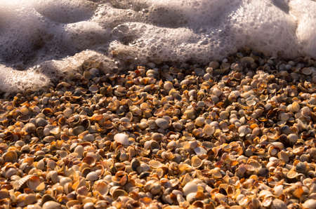 Seashells and foam on the seashore, background Archivio Fotografico