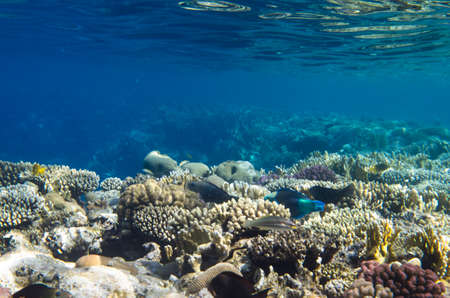 Coral reef landscape under water and fish Archivio Fotografico