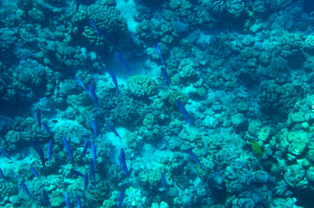 Underwater seabed landscape with corals