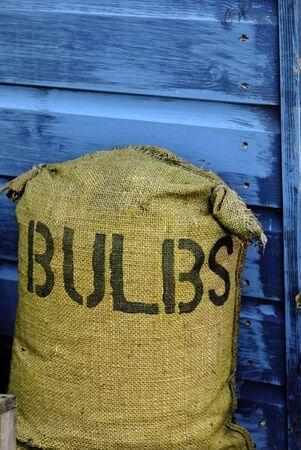 sackful: bag of bulbs