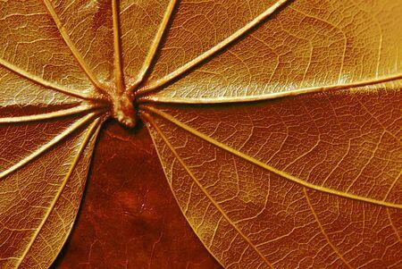 leaf Stock Photo - 4649965