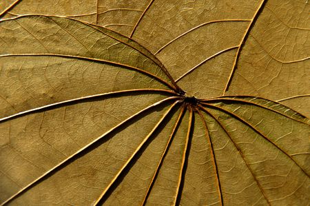 texture of leaves Stock Photo - 4649956