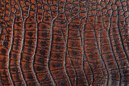 crocodile leather Stock Photo - 5372137
