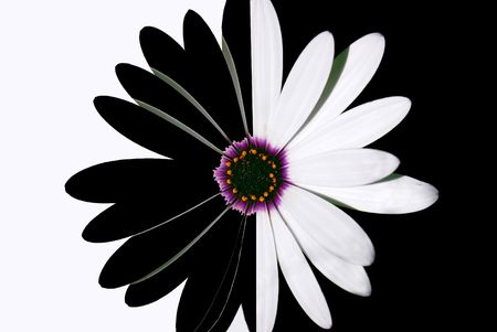 bloomer: flower black and white