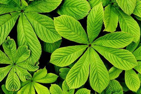 big leaves Stock Photo
