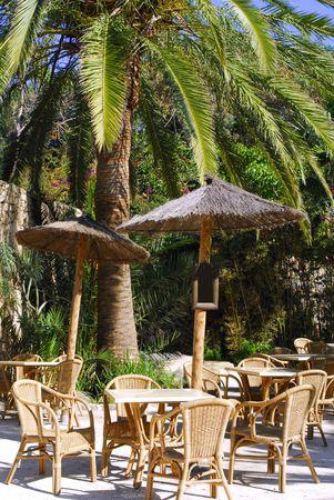 tropische restaurant met palm boom