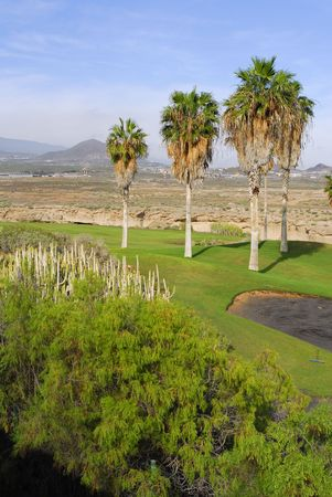 golf course with palm tree and mountain view photo