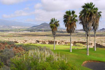 Golfbaan met palm boom en mountain view