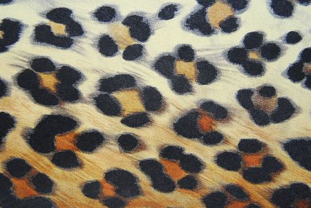 leopard pattern background Stock Photo - 6426434