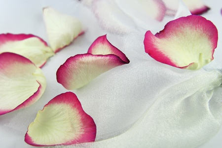 mariage: rose petals on white organza fabric Stock Photo