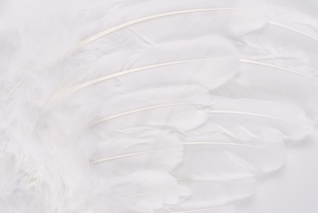 white wing feather texture macro photo