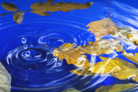 autumn leaves in  water photo