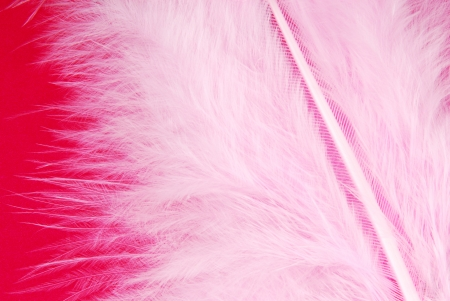 plumage: pink feather plumage texture