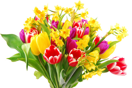 tulip and daffodil bouquet isolated on white photo