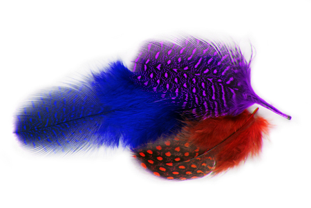 feathers covert plumage isolated on white Stock Photo
