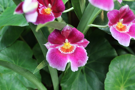 Different green plants. Closeup soft focus texture. Stock Photo