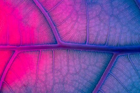 Neon fluorescens Abstract Backlit Leaf Texture imitating veins