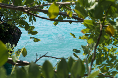 Natural frame formed by tree with view on ocean with free space for writing in the middle, background.