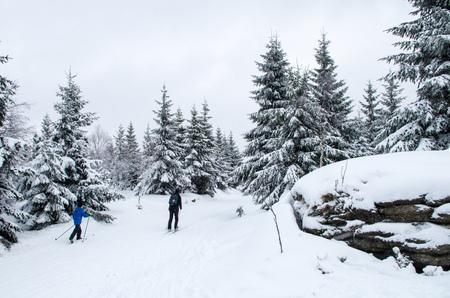 Two cross-country skier in Jizera Mountains.