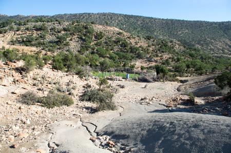 Moroccan desert turns green after rare rain: Goats drinking place.