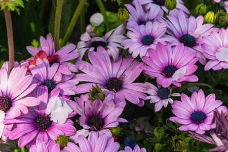 group of purple flower close up 版權商用圖片