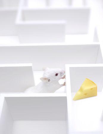 laberinto: Mi queso  Foto de archivo