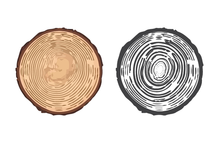 tree rings: Tree rings background and saw cut tree trunk. Vector illustration of tree rings. Cross section of tree stump isolated on white background