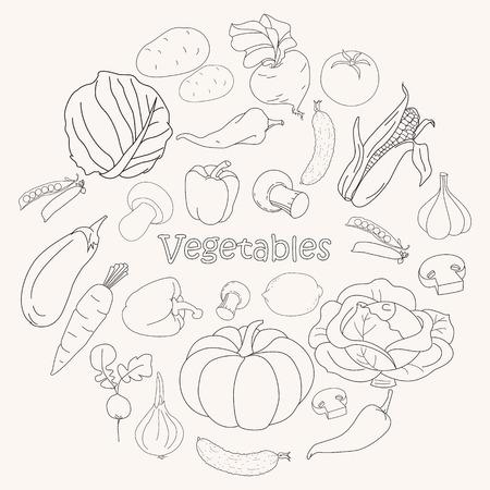 Set van verschillende doodles, hand getekende eenvoudige schetsen van verschillende soorten groenten. Vector illustratie geïsoleerd op een witte achtergrond. Verzameling van Groente schets.